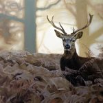 Eric Vanasse, «Surprise dans la forêt», huile sur toile, 30×40 po