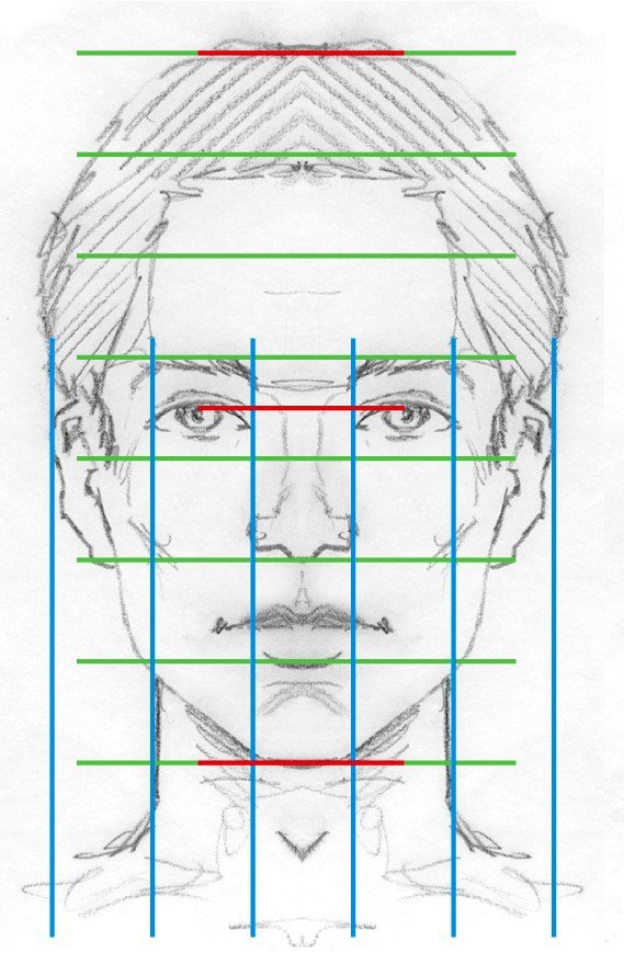 face proportion diagram